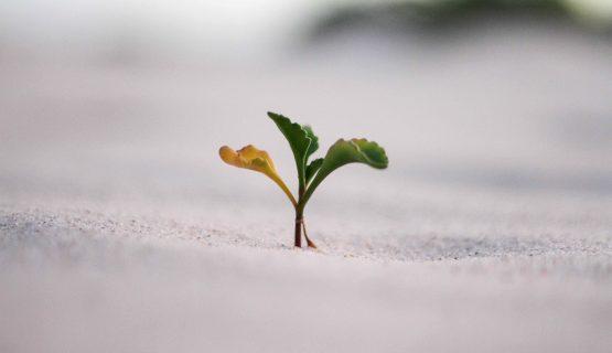 Explosieve groei van je bedrijf zónder marketingbudget: 3 growth hacks